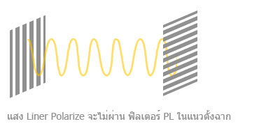 x-polarlized001